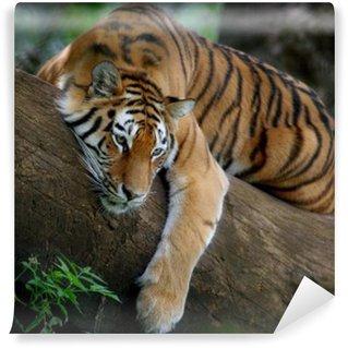 Vinylová Fototapeta Tiger na stromě