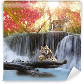 Vinylová Fototapeta Tiger v waterwall