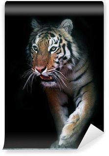 Vinylová Fototapeta Tiger vyjde