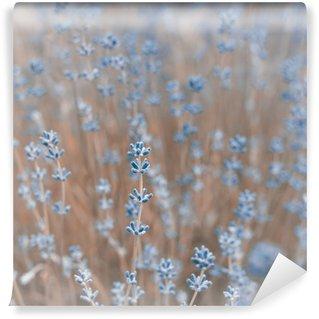 Fototapeta Winylowa Tło Kwiaty lawendy