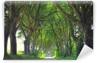 Vinylová Fototapeta Tmavě Živé ploty stromy