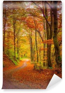 Vinylová Fototapeta Tmavý lesní silnice v lese na podzim.