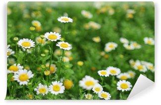 Fototapeta Winylowa Trawa zielona łąka z daisy kwiat.