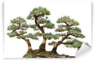 Vinylová Fototapeta Tři borovice bonsaje