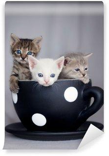 Vinylová Fototapeta Tři koťata sedí ve velkém šálku