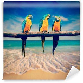 Vinylová Fototapeta Tři papoušci (Blue-a-žlutý papoušek (ara ararauna), také známý