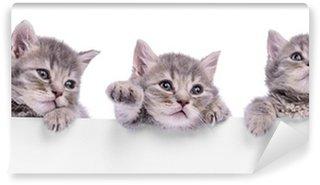 Vinylová Fototapeta Tři skotský kotě