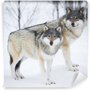 Vinylová Fototapeta Tři vlci ve sněhu