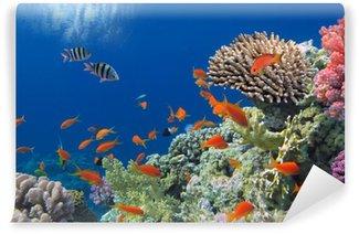 Vinylová Fototapeta Tropical Fish na korálovém útesu v moři Red
