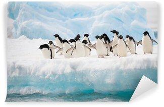 Vinylová Fototapeta Tučňáci na sněhu