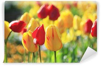 Fototapeta Vinylowa Tulip