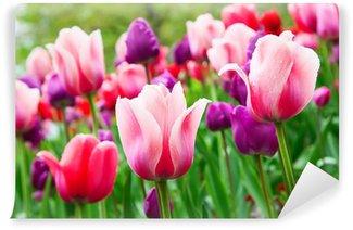 Vinylová Fototapeta Tulips