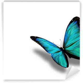 Fototapeta Vinylowa Turkusowy motyl, na białym tle