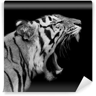 Vinylová Fototapeta Tygr sumaterský Roaring