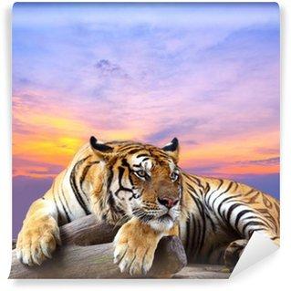 Fototapeta Winylowa Tygrys szuka coś na skale z piękne niebo o zachodzie słońca