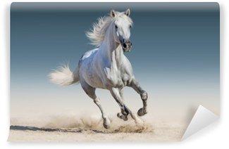 Fototapeta Vinylowa Uruchomić biały koń galop