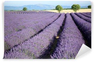 Vinylová Fototapeta Valensole provence francie levandulová pole s květinami