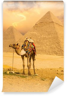 Vinylová Fototapeta Vázaný Camel Standing předních Pyramidy V