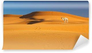 Vinylová Fototapeta Velbloud v saharské pouště, Maroko