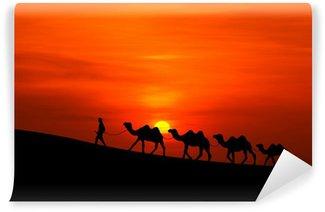 Vinylová Fototapeta Velbloudí karavana sillhouette se západem slunce