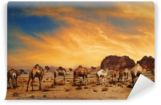Vinylová Fototapeta Velbloudi v Wadi Rum