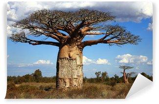 Vinylová Fototapeta Velký baobab Madagaskar