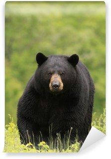 Vinylová Fototapeta Velký samec černý medvěd