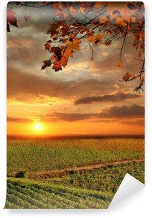 Vinylová Fototapeta Vine Landscape in Chianti, Itálie