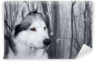 Vinylová Fototapeta Vlk v lese