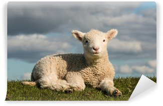 Vinylová Fototapeta Vyhřívají ovečku
