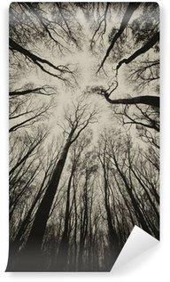 Vinylová Fototapeta Vzestupný názor na tmavém strašidelném lese sépie