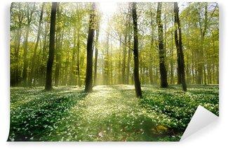Fototapeta Winylowa Waldlichtung podświetlany