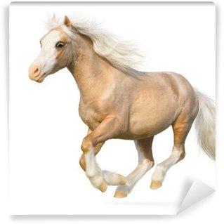 Vinylová Fototapeta Welsh pony cválá