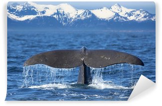 Vinylová Fototapeta Whale Tail