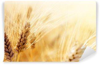 Vinylová Fototapeta Wheat field