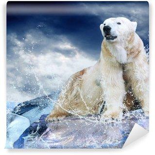 Vinylová Fototapeta White Polar Bear Hunter na ledě v kapky vody.