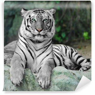 Vinylová Fototapeta WHITE TIGER na skále v zoo
