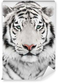 Vinylová Fototapeta White tiger