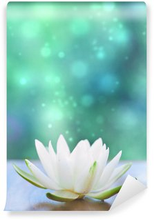 Vinylová Fototapeta White water lilly květina