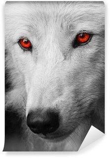 Vinylová Fototapeta White Wolf