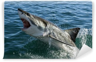 Fototapeta Winylowa Wielki biały rekin