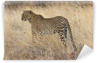 Vinylová Fototapeta Wild leopard stojící v žluté trávy