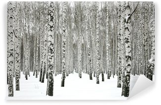 Fototapeta Winylowa Winter brzozowy las