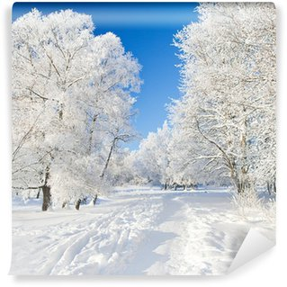 Fototapeta Winylowa Winter park w śniegu