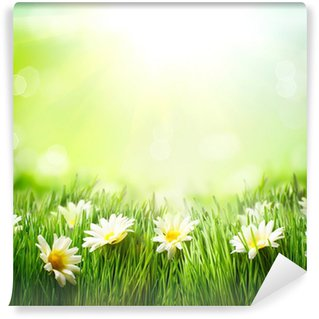 Fototapeta Winylowa Wiosenna łąka z Daisies. Trawa i kwiaty granicy