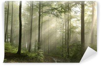 Fototapeta Vinylowa Wschód słońca w lesie po deszczu wiosna bukowego