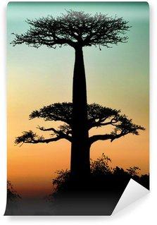 Vinylová Fototapeta Západ slunce a stromy baobaby