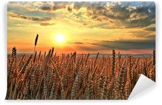 Vinylová Fototapeta Západ slunce nad pšeničné pole.