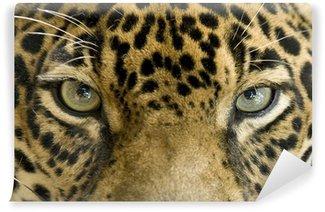 Vinylová Fototapeta Zavřít oči krásné jaguára nebo Panthera onca