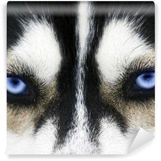Vinylová Fototapeta Zblízka na modré oči psa